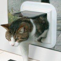 catdoors-200x200